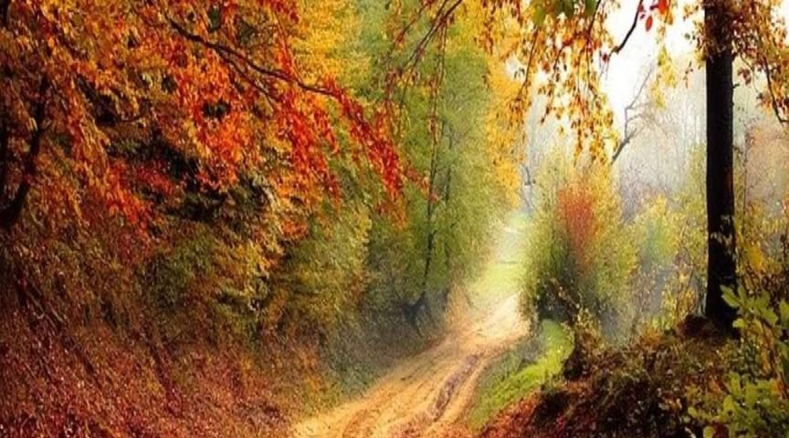 hoe je fitter en gezonder de herfst beleeft